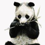Panda_Wielka