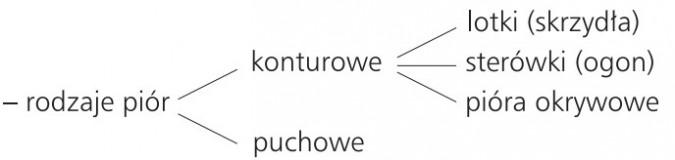 Rodzaje piór: konturowe (lotki, sterówki, okrywowe), puchowe.