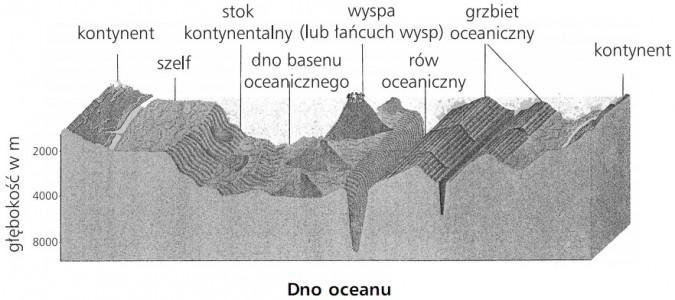 Dno oceanu. Kontynent, szelf, stok kontynentalny, dno basenu oceanicznego, wyspa (łańcuch wysp), rów oceaniczny, grzbiet oceaniczny, kontynent.