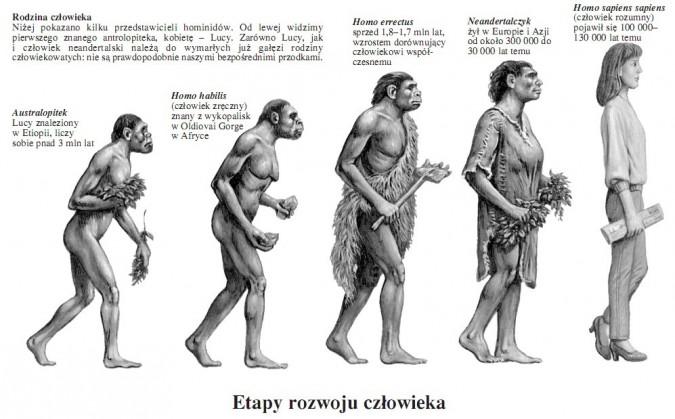 Etapy rozwoju człowieka. Rodzina człowieka. Niżej pokazano kilku przedstawicieli hominidów. Od lewej widzimy pierwszego znanego antrolopiteka, kobietę – Lucy. Zarówno Lucy, jak i człowiek neandertalski należą do wymarłych już gałęzi rodziny człowiekowatych: nie są prawdopodobnie naszymi bezpośrednimi przodkami. Australopitek Lucy znaleziony w Etiopii, liczy sobie ponad 3 mln lat. Homo habilis (człowiek zręczny) znany z wykopalisk w Oldiovai Gorge w Afryce. Homo errectus sprzed 1,8–1,7 mln lat, wzrostem dorównujący człowiekowi współczesnemu. Neandertalczyk żył w Europie i Azji od około 300 000 do 30 000 lat temu. Homo sapiens sapiens (człowiek rozumny) pojawił się 100 000 – 130 000 lat temu.