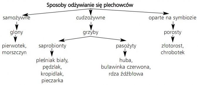 Sposoby odżywiania się plechowców: 1) samożywne (glony - pierwotek, morszczyn); 2) cudzożywne - grzyby (a. saprobionty - pleśniak biały, pędzlak, kropidlak, pieczarka; b. pasożyty - huba, buławinka czerwona, rdza źdźbłowa); 3) oparte na symbiozie (porosty - złotorost, chrobotek).