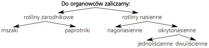 Do organowców zaliczamy: 1) rośliny zarodnikowe (mszaki, paprotniki); 2) rośliny nasienne (nagonasienne, okrytonasienne - jednoliścienne, dwuliścienne).