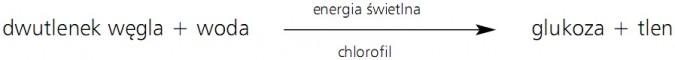 Fotosynteza. Dwutlenek węgla + woda - energia świetlna, chlorofil, glukoza + tlen