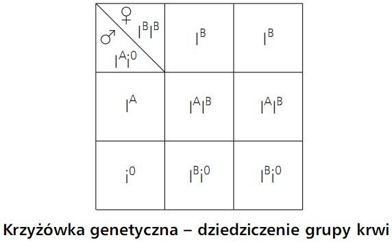 Krzyżówka genetyczna - dziedziczenie grupy krwi.