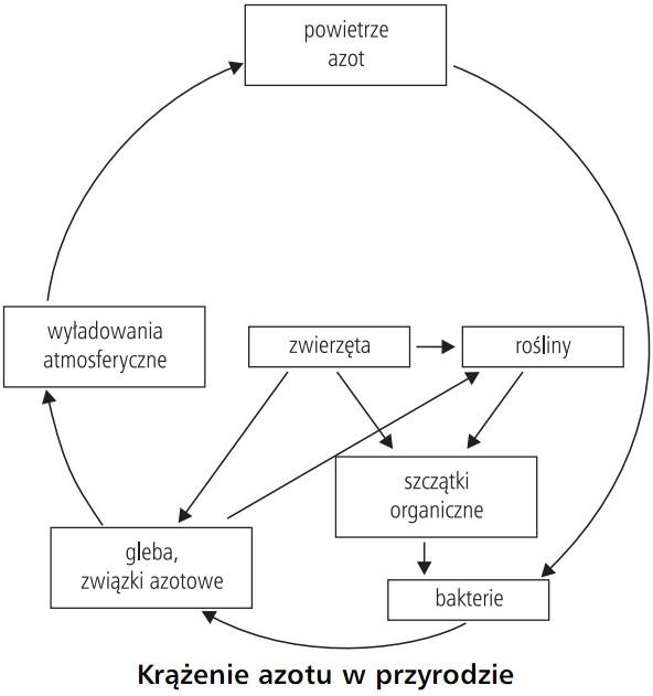 Krążenie azotu w przyrodzie. Powietrze azot, wyładowania atmosferyczne, zwierzęta, rośliny, gleba, związki azotowe, szczątki organiczne, bakterie.
