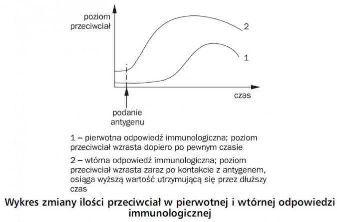 Wykres zmiany ilości przeciwciał w pierwotnej i wtórnej odpowiedzi immunologicznej. Poziom przeciwciał, podanie antygenu, czas. 1 - pierwotna odpowiedź immunologiczna; poziom przeciwciał wzrasta dopiero po pewnym czasie. 2 - wtórna odpowiedź immunologiczna; poziom przeciwciał wzrasta zaraz po kontakcie z antygenem, osiąga wyższą wartość utrzymującą się przez dłuższy czas.