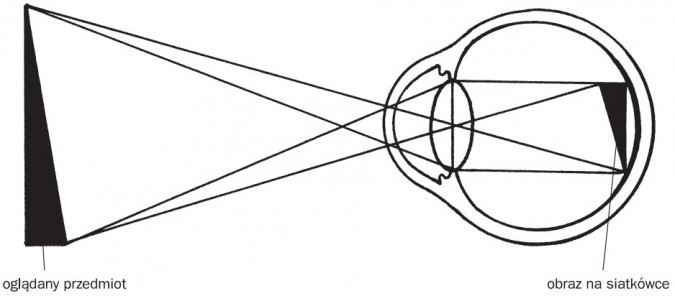 Bieg promieni świetlnych w oku. Oglądany przedmiot, obraz na siatkówce.