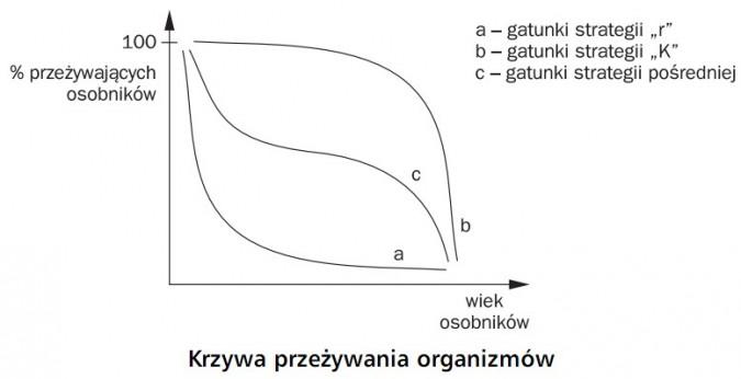 Krzywa przeżywania organizmów. % przeżywających osobników, wiek organizmów. Gatunki strategii r, gatunki strategii K, gatunki strategii pośredniej.