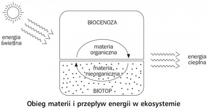 Obieg materii i przepływ energii w ekosystemie. Energia świetlna, biocenoza, materia organiczna, materia nieorganiczna, biotop, energia cieplna.