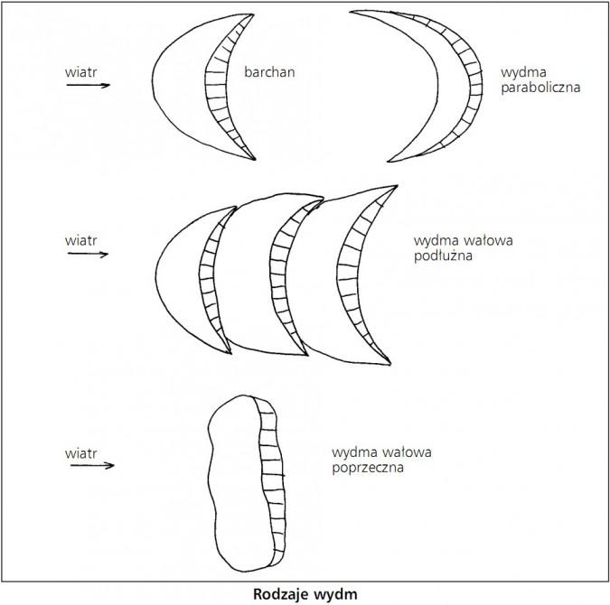 Rodzaje wydm. Wiatr. Barchan, wydma paraboliczna, wydma wałowa podłużna, wydma wałowa poprzeczna.