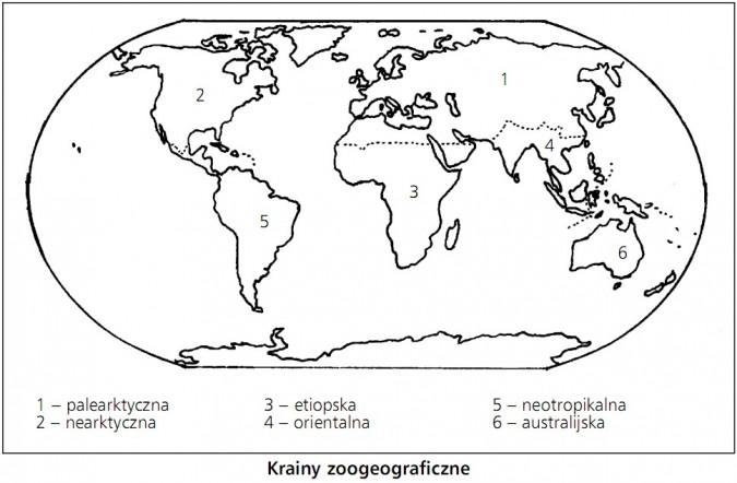 Krainy zoogeograficzne: palearktyczna, nearktyczna, etiopska, orientalna, neotropikalna, australijska.