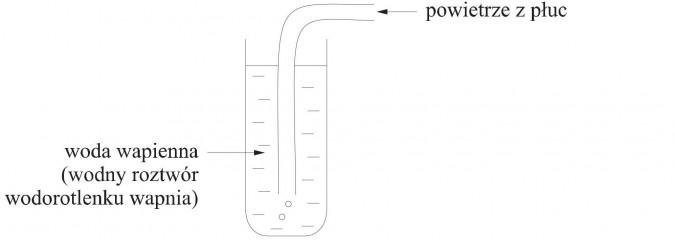 Wykrywanie obecności dwutlenku węgla. Powietrze z płuc, woda wapienna (wodny roztwór wodorotlenku wapnia).